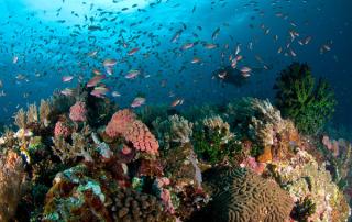 anilao_diving