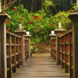 a view of a bridge